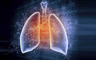 Строение и функции органов дыхания