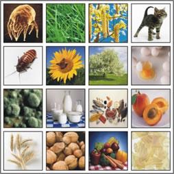 аллергены - причина атопической астмы