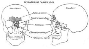 Придаточные носовые пазухи